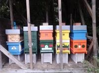 Honigbienen Invest. 22Kg Destination Weinviertler Honig mit Akazienhonig und Blütenhonig Gutschein