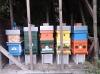 Honigbienen Invest. 22Kg Destination Bisamberg Honig Akazien- und Blütenhonig Gutschein
